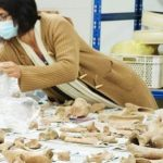 Picture of researcher classifying animal bone remnants
